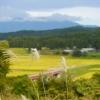 これから稲刈りの季節です